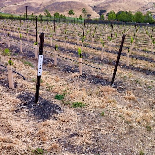 Livermore Valley Wine | East Bay Wine