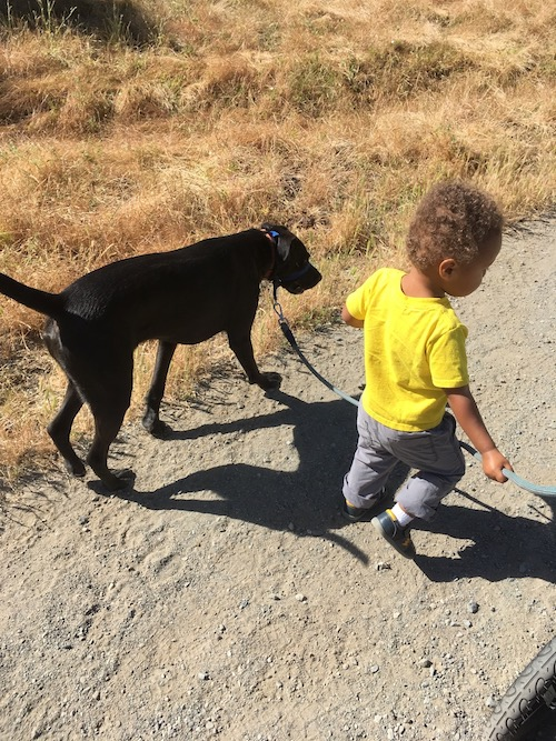 dog-friendly hikes in the East Bay