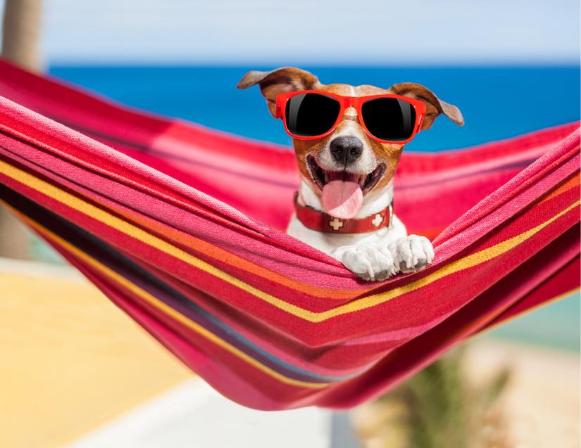happy dog in hammock