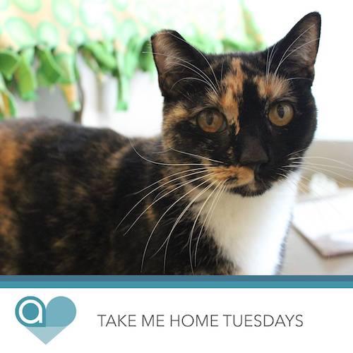 Take Me Home Tuesdays | Abio Properties